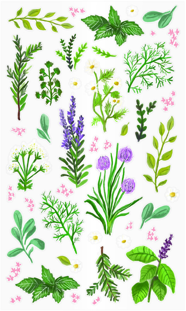 Kitchen Diary Stickers, Herbs (Clear)