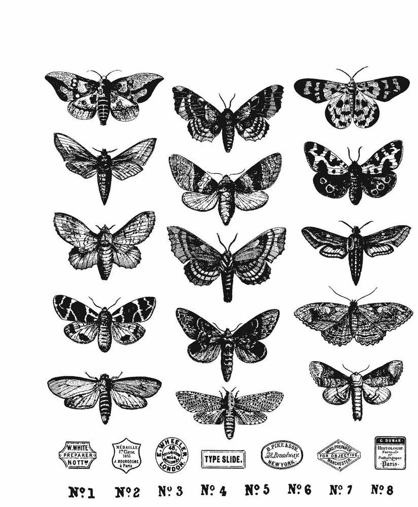 Cling Stamp, Moth Study